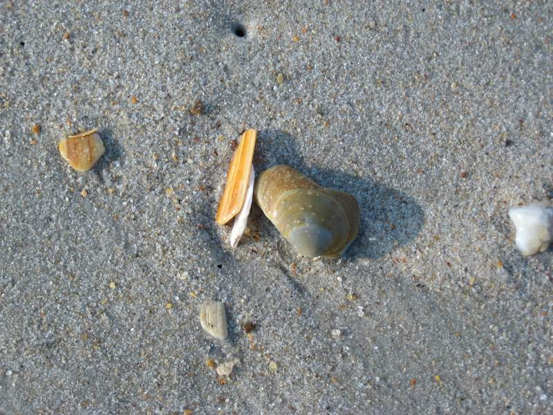 Collecting Seashells II